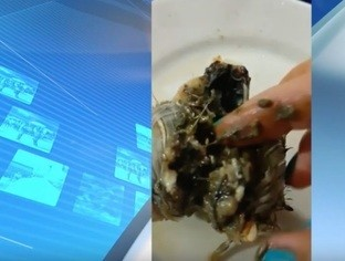 Bióloga denuncia que comeu caranguejo contaminado por óleo no Piauí
