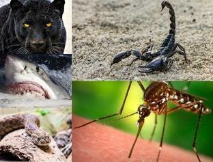 Confira animais que com uma picada, pode lhe levar a morte