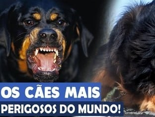 Confira os cães mais perigosos do mundo