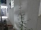 Idoso faz jardim de inverno com pés de maconha na porta de apartamento