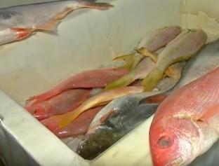 Consumidor é surpreendido com alta no preço do peixe em Teresina