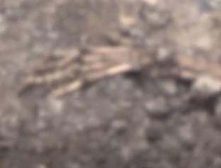 Ossada humana é encontrada em matagal na zona Leste de Teresina