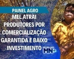 Mel atrai produtores por comercialização garantida e baixo investimento